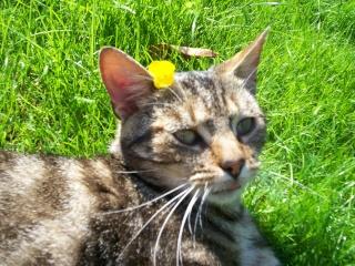 Chat de gouttière Symba_10