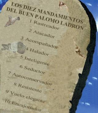 CLUB DEL PALOMO LADRON Y LADINO-foro dedicado ah palomos de trabajo, de suelta y hembreo,zuriteo