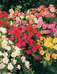 Flora i Fauna Noaura10