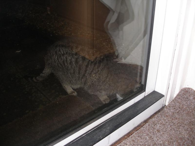 Αγγλό-γατες!!! - Σελίδα 2 P1140210