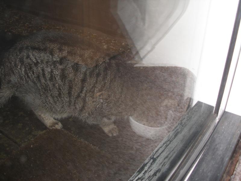 Αγγλό-γατες!!! - Σελίδα 2 P1140211