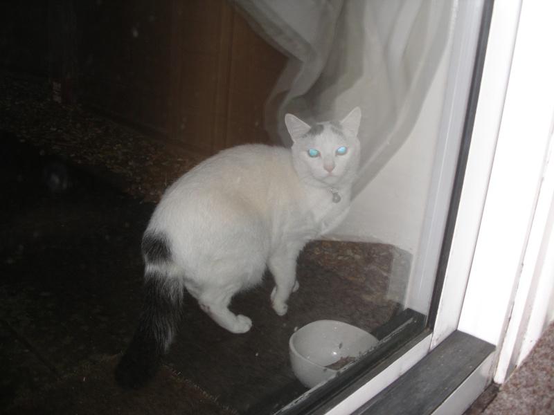 Αγγλό-γατες!!! - Σελίδα 2 P1140213