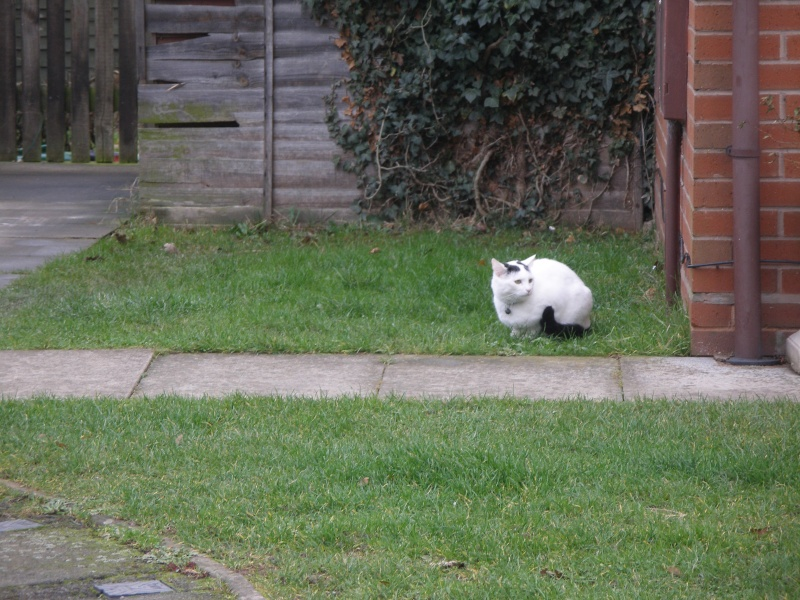 Αγγλό-γατες!!! - Σελίδα 2 Pc270210