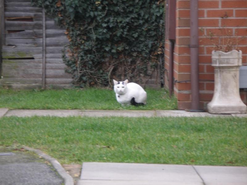 Αγγλό-γατες!!! - Σελίδα 2 Pc270211