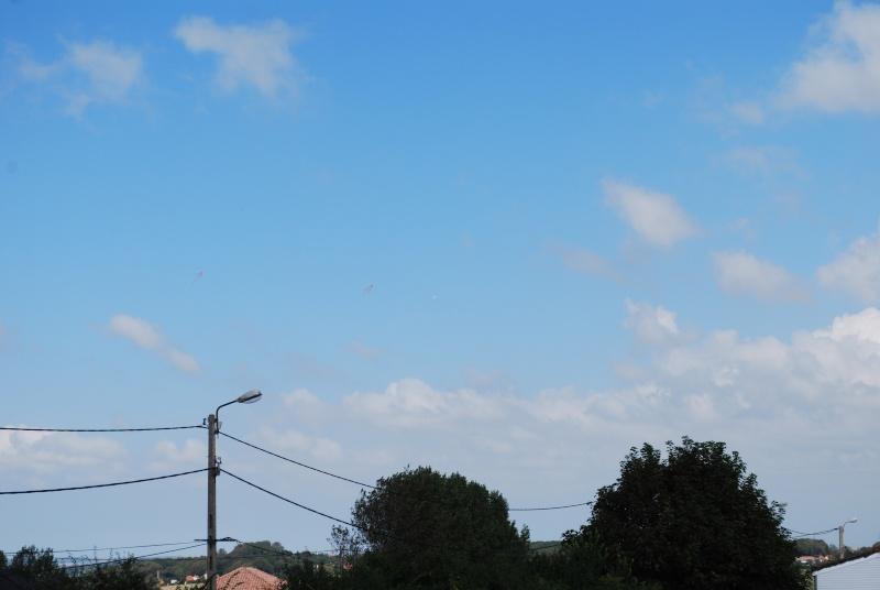 2012: le 23/08 à 14H52 - Un phénomène insolite - Saint-Martin-Boulogne (62)  - Page 3 Dsc_0230