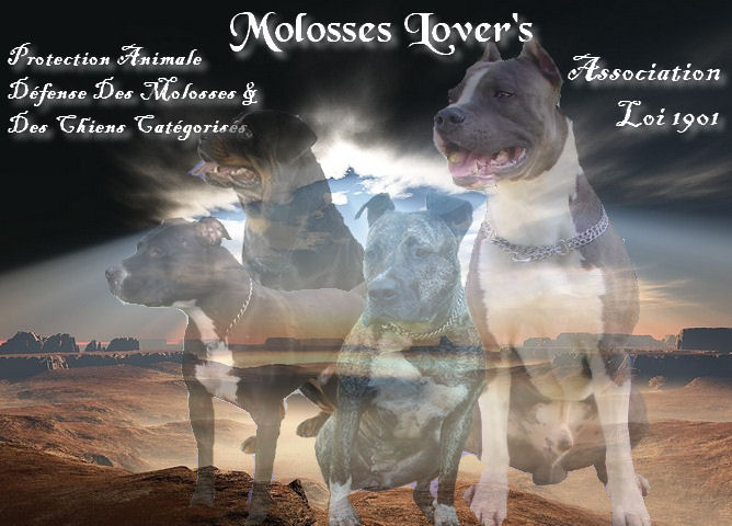 Molosses Lover' s