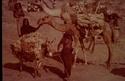 Quelques photos entre Djibouti et Obock en 1969 Pict0016