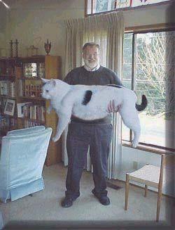просто юмор Bigcat10