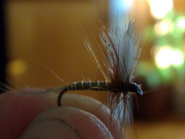 Blue Winged Olive (BWO) Bwo10