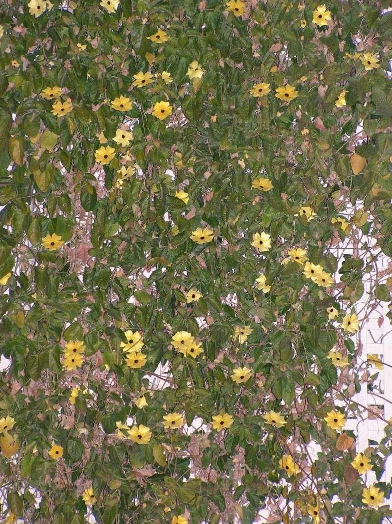 Jardin botanique de Nice dimanche 24-02-08 Pict0012