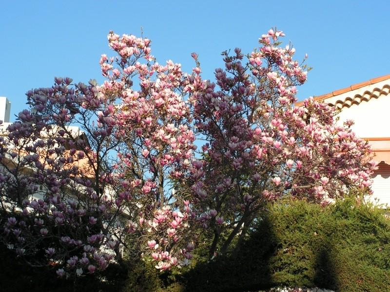 Jardin botanique de Nice dimanche 24-02-08 Pict0013