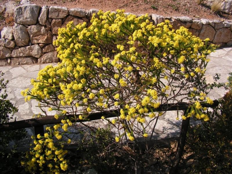 Jardin botanique de Nice dimanche 24-02-08 Pict0014