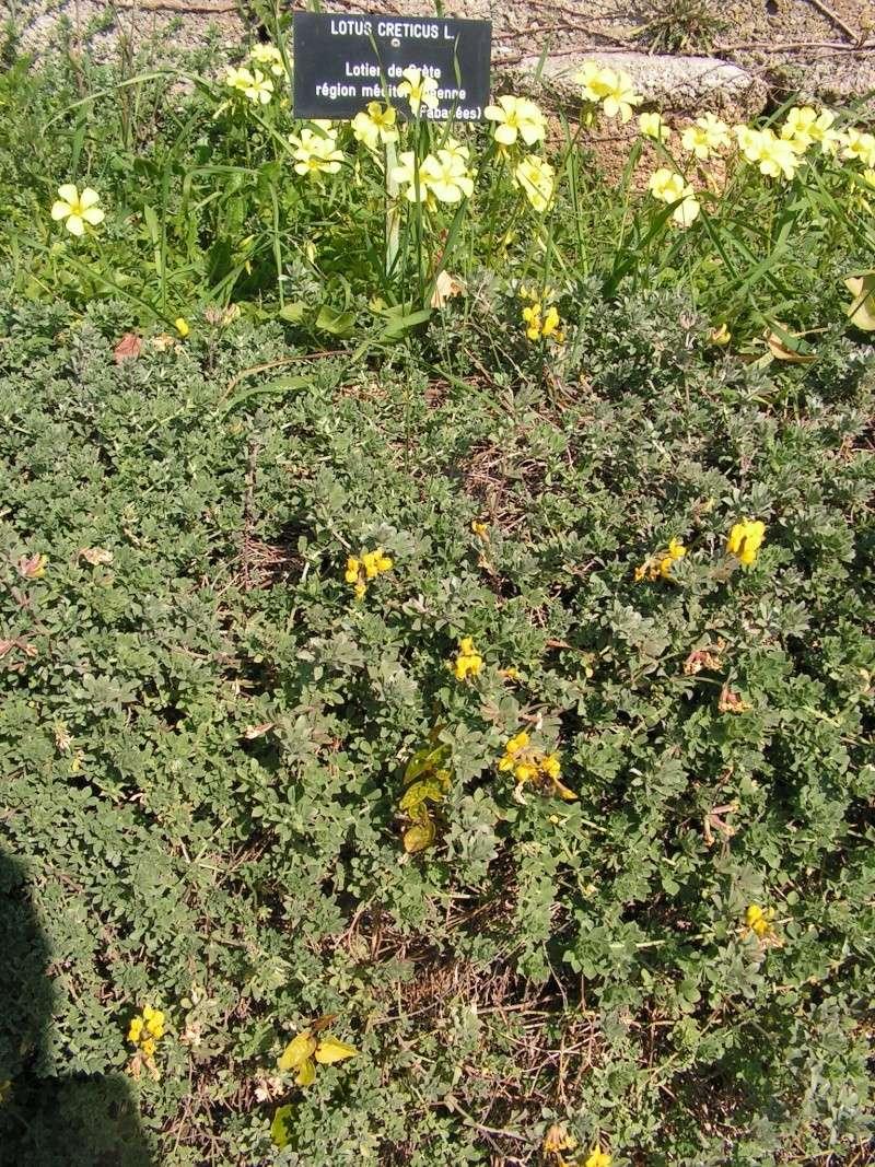 Jardin botanique de Nice dimanche 24-02-08 Pict0015