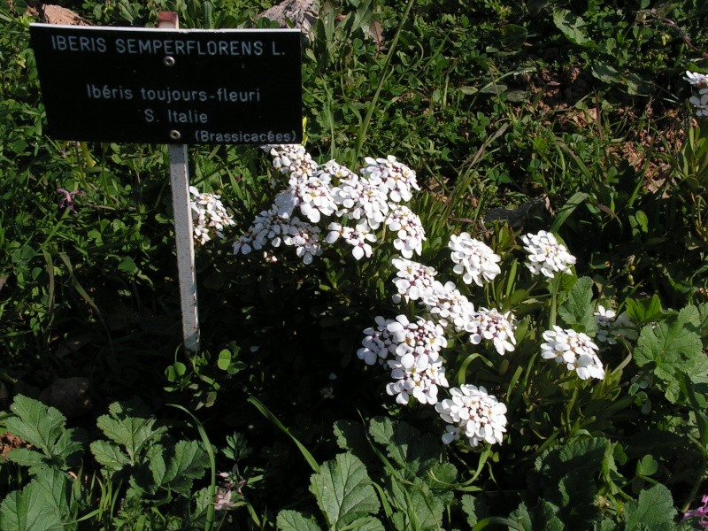 Jardin botanique de Nice dimanche 24-02-08 Pict0016