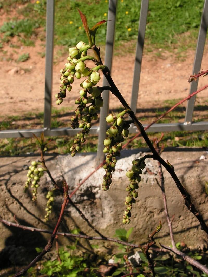 Jardin botanique de Nice dimanche 24-02-08 Pict0017