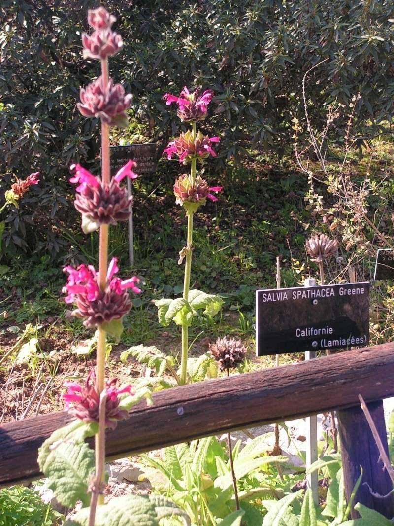 Jardin botanique de Nice dimanche 24-02-08 Pict0019