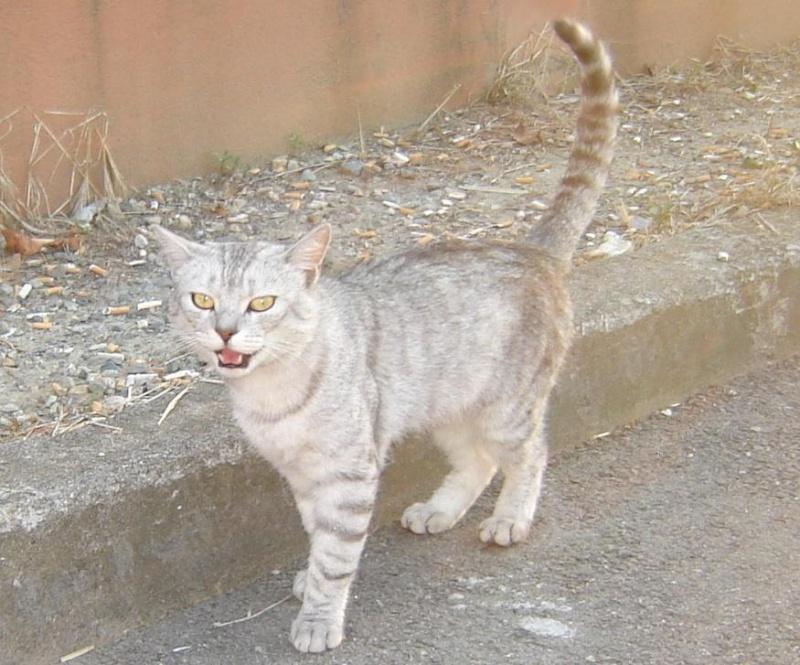 Trouvé chat errant quartier Monturon -lycée international Copie_11