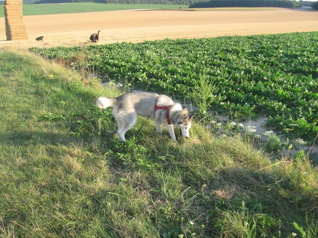 CANDY - femelle husky 12 ans - Asso TAIGA [DECEDEE] - Page 3 Img_0110