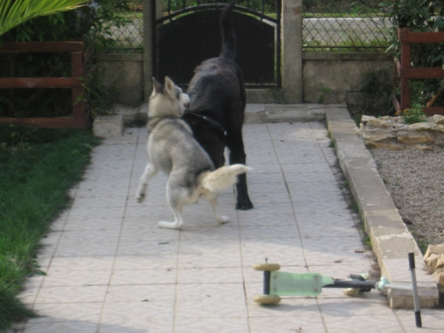 CANDY - femelle husky 12 ans - Asso TAIGA [DECEDEE] - Page 3 Img_0116