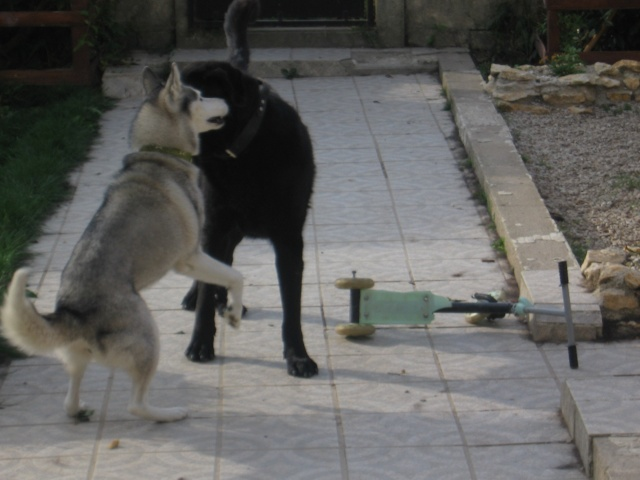 CANDY - femelle husky 12 ans - Asso TAIGA [DECEDEE] - Page 3 Img_0117