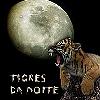 Tigres da Noite