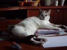 Buki el gato de los ojos tristes Buki410