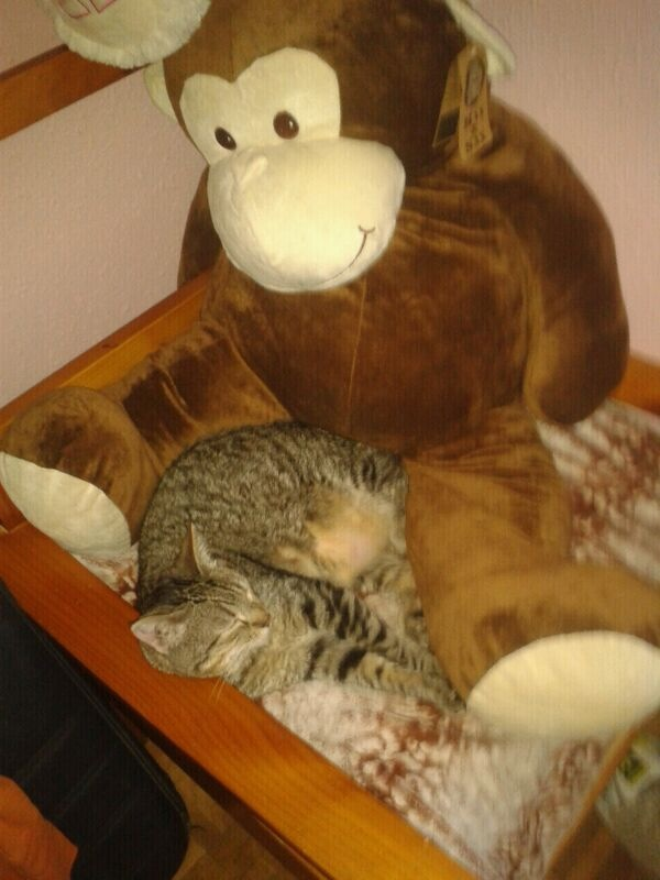 Luca, ahora Kitty Luca10