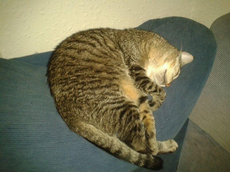 Luca, ahora Kitty Luca110