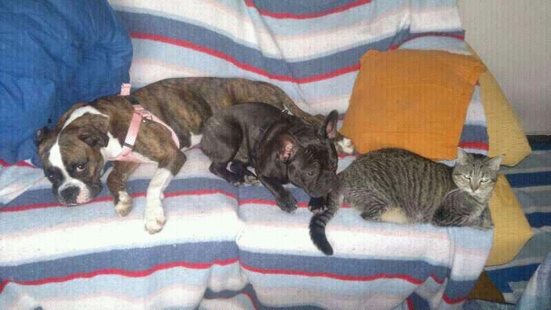 Luca, ahora Kitty Luca210