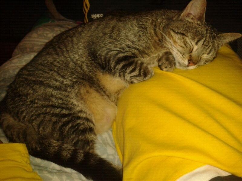 Luca, ahora Kitty Luca510