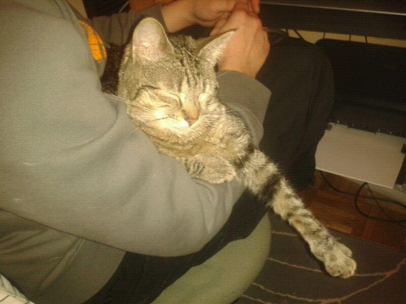 Luca, ahora Kitty Luca610