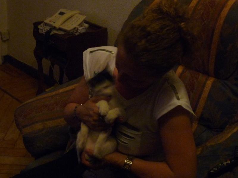 Bolita, señor gato - Página 5 P1010716