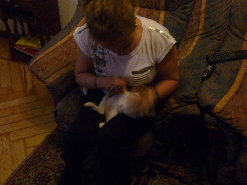 Bolita, señor gato - Página 5 P1010717