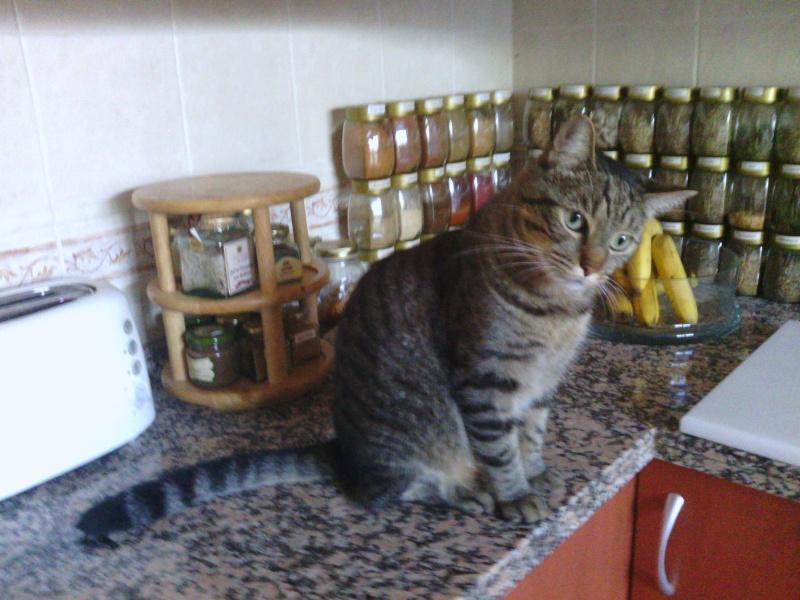 Pablito, otro gran gatito. Pablit11