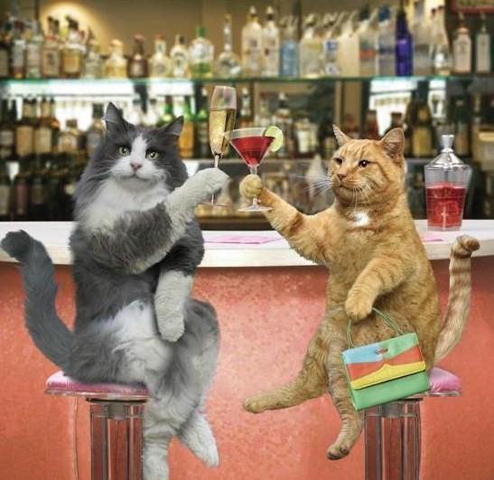 Les chats Version LO 11158310