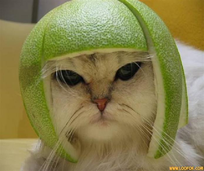 Les chats Version LO 11167710