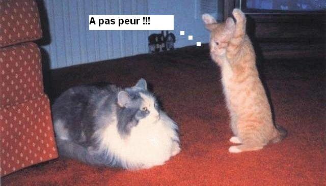 Les chats Version LO 11320110