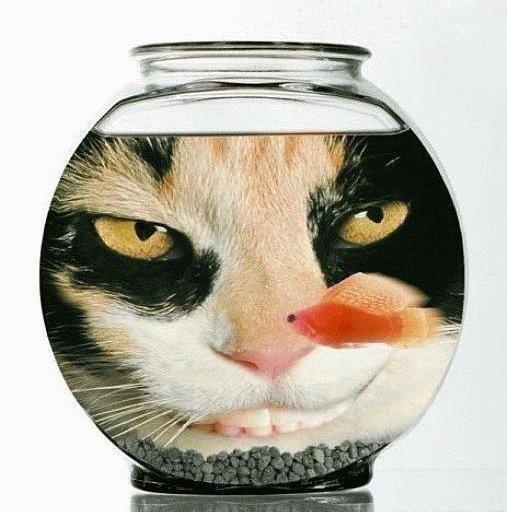 Les chats Version LO 11320910