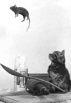 Les chats Version LO Animau11
