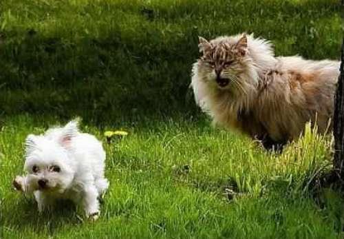 Les chats Version LO Catgro10