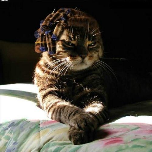 Les chats Version LO Za3ma_10