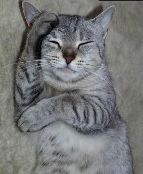 Les chats Version LO Za3ma_11
