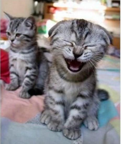 Les chats Version LO Za3ma_17