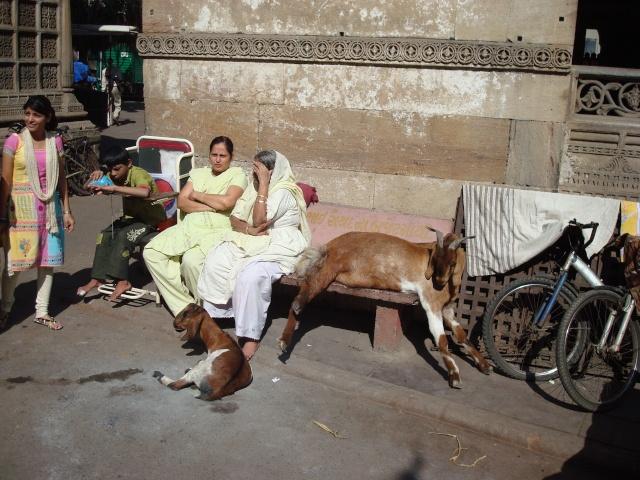 Ci torno!!! India 2011 India_31