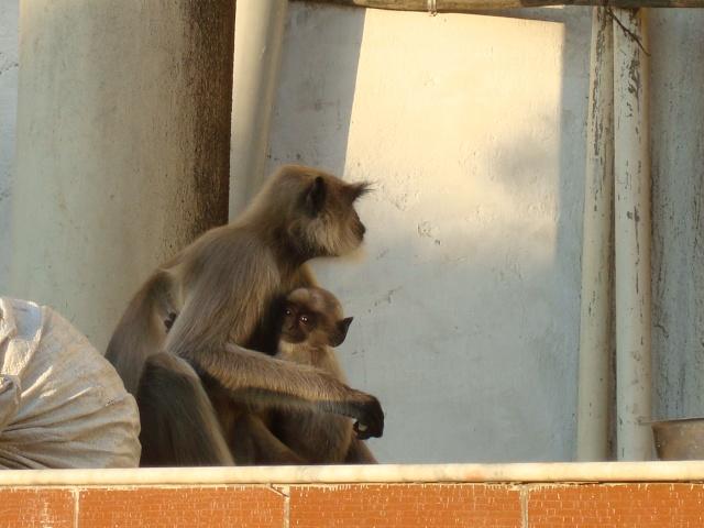 Ci torno!!! India 2011 India_37