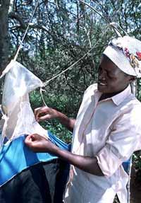 اخطر الحشرات في العالم ذبابة التسي تسي 610
