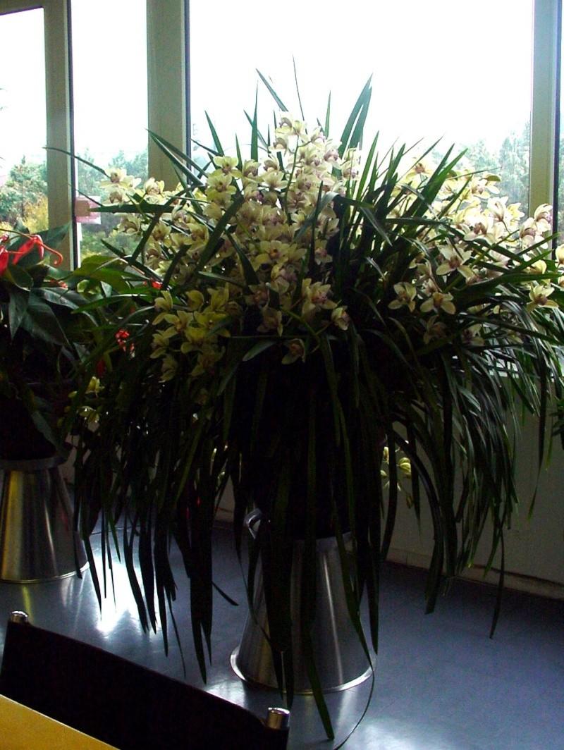 Photos d'orchidées. Dsc00010