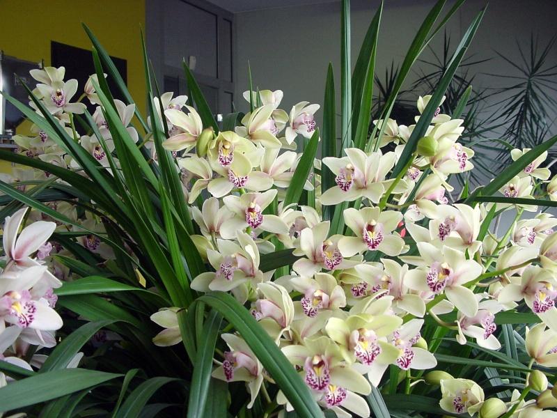 Photos d'orchidées. Dsc00011