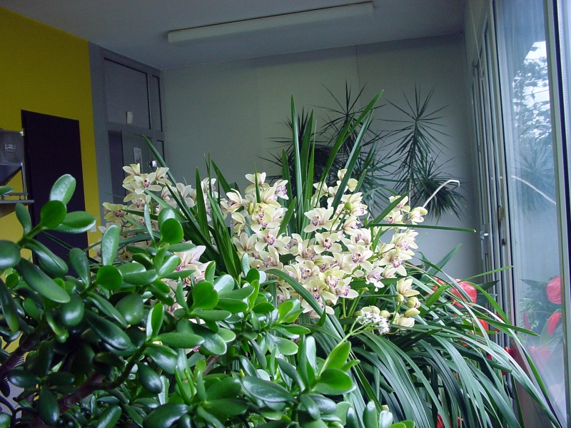 Photos d'orchidées. Dsc00012