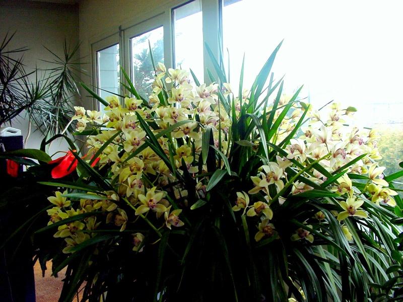Photos d'orchidées. Dsc00013